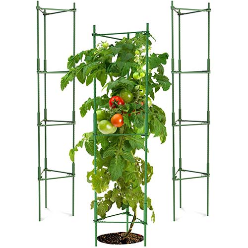 4. K-Brands Tomato Cage - Plant Stakes and Support with Clips (3 Pack - Upto 72 inches Tall)